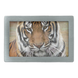 Hebilla Rectangular Alquileres Tigres en la reflexión