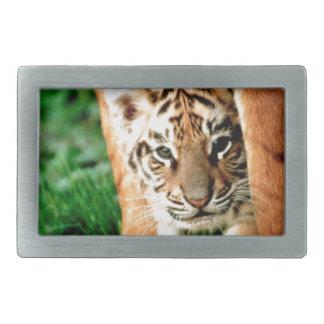 Hebilla Rectangular El tigre Cub de Bengala mira hacia fuera
