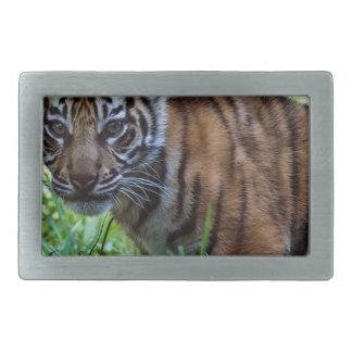 Hebilla Rectangular Tigre Cub de Sumatran de los alquileres