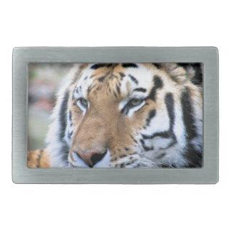 Hebilla Rectangular Tigre de Bengala real estoico de los alquileres