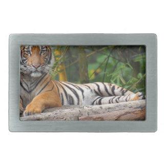 Hebilla Rectangular Tigre del Malay de los alquileres que gandulea en