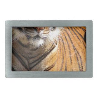 Hebilla Rectangular Tigre malayo de los alquileres