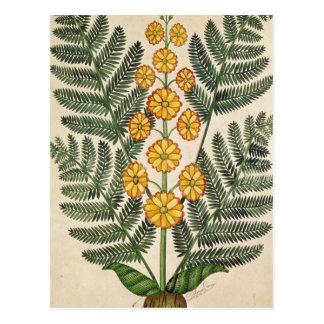 Helecho con las flores amarillas postal