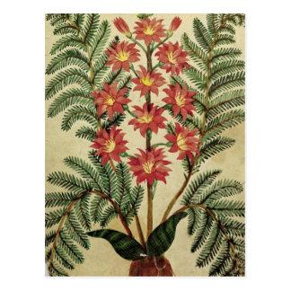 Helecho con las flores rojas y amarillas postal