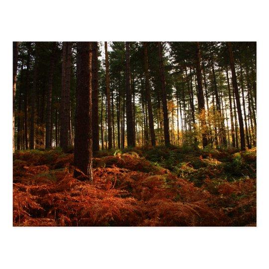Helechos del otoño postal