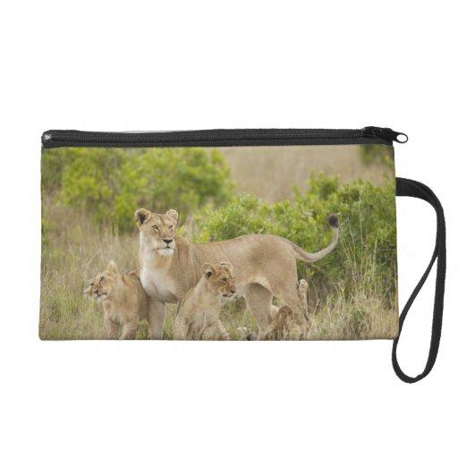 Hembra adulta del león africano con los cachorros,