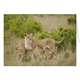 Hembra adulta del león africano con los cachorros, felicitacion