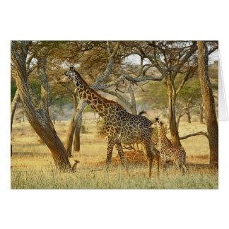 Hembra adulta y jirafa juvenil, Giraffa Tarjeta