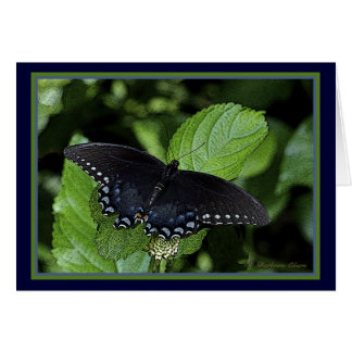 Hembra Swallowtail-Negra del tigre del este Tarjeta De Felicitación