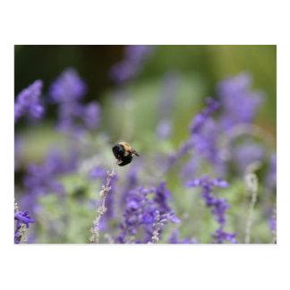 Hermoso manosee la abeja postal