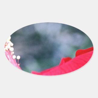 Hibisco 4 pegatina ovalada