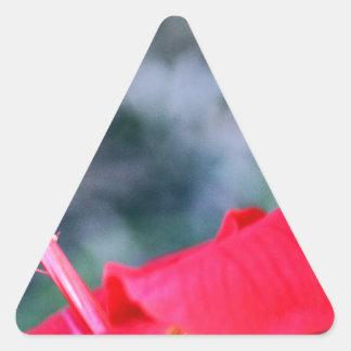 Hibisco 4 pegatina triangular