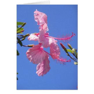 Hibisco hawaiano tarjeta de felicitación