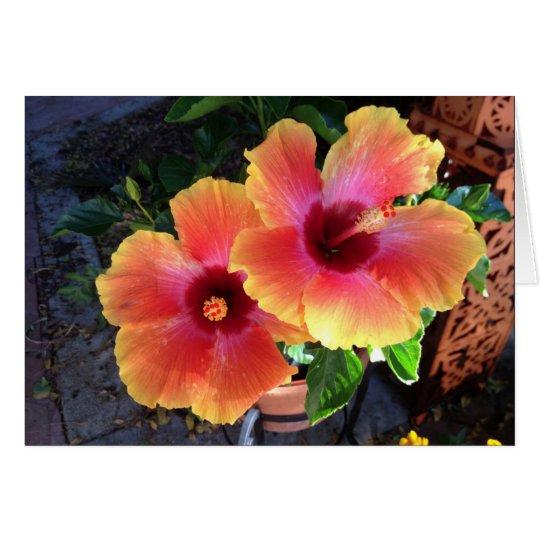 - hibiscos amarillos de la extremidad tarjeta de felicitación
