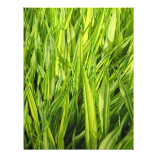 hierba tarjetones