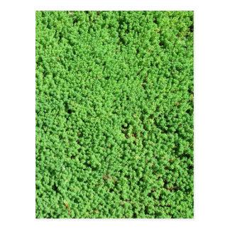 Hierba verde decorativa postal