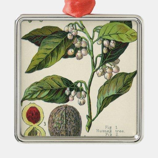Hierbas especia, semillas de la comida del vintage ornamentos para reyes magos
