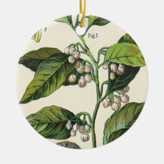 Hierbas especia, semillas de la comida del vintage adorno