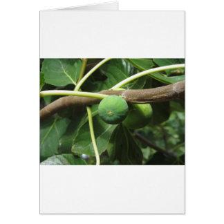 Higos verdes que maduran en una higuera tarjeta