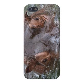 Hipopótamo 8879 iPhone 5 protectores