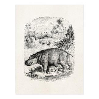 Hipopótamos del bebé del oficio de enfermera del postal