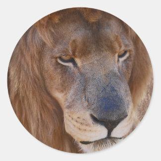 Historia de los leones pegatina redonda