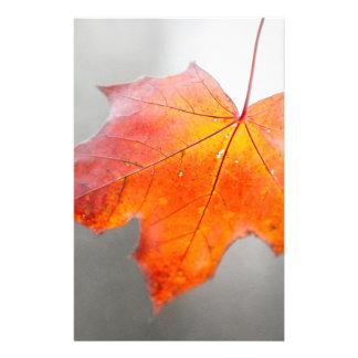 Hoja de arce roja - otoño del terciopelo folleto 14 x 21,6 cm