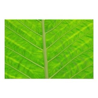 Hoja verde arte fotografico