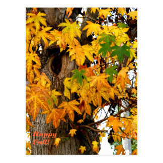 Hojas de la caída y postal del árbol