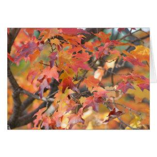 Hojas de otoño 3 tarjeta pequeña