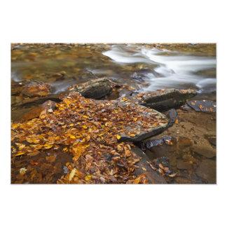 Hojas de otoño a lo largo de la cala del espejo en impresiones fotograficas