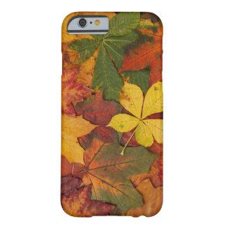 Hojas de otoño funda de iPhone 6 barely there
