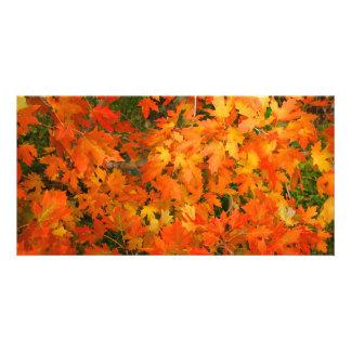 Hojas de otoño tarjeta fotografica