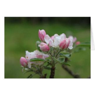 hojas del flor y del verde de la manzana tarjetón