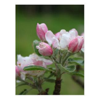 hojas del flor y del verde de la manzana tarjeta postal