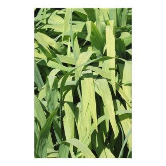 Hojas del verde folleto 14 x 21,6 cm