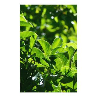 Hojas frescas del verde de la primavera tarjetas publicitarias