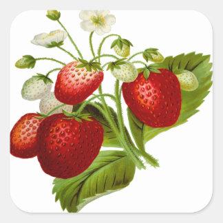 Hojas frondosas de la hoja de la fruta de la pegatina cuadrada