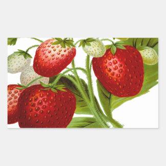 Hojas frondosas de la hoja de la fruta de la pegatina rectangular