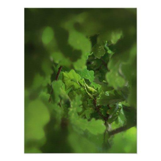 Hojas verdes del roble. Gap en las ramas Comunicado Personal