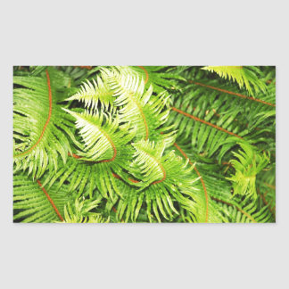 Hojas verdes enormes del helecho pegatina rectangular