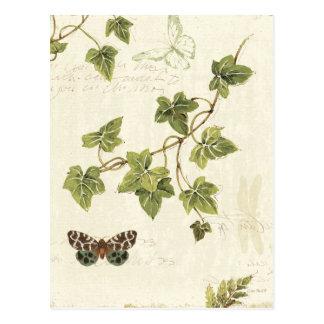 Hojas y una mariposa postal