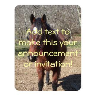 Hola allí de caballo invitación 10,8 x 13,9 cm