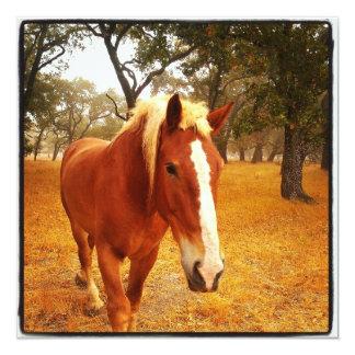 Hola caballo invitación 13,3 cm x 13,3cm