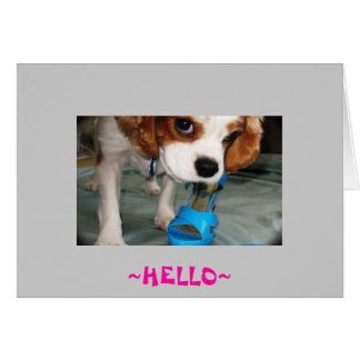 hola perro tarjeta pequeña