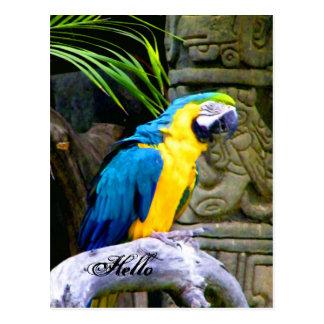 Hola/que le falta/que piensa en you_Postcard Postal