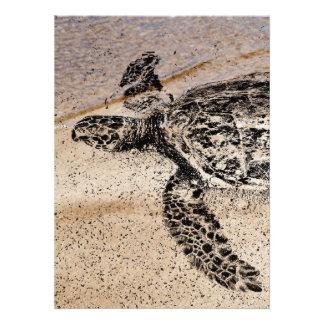 Honu - tortuga de mar hawaiana anuncios