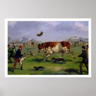 Hostigamiento de Bull aceite en el papel puesto e Posters