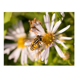 Hoverfly Postales