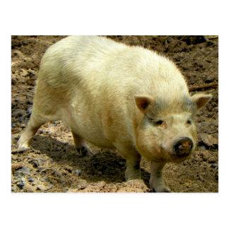 Howdy cerdo postal